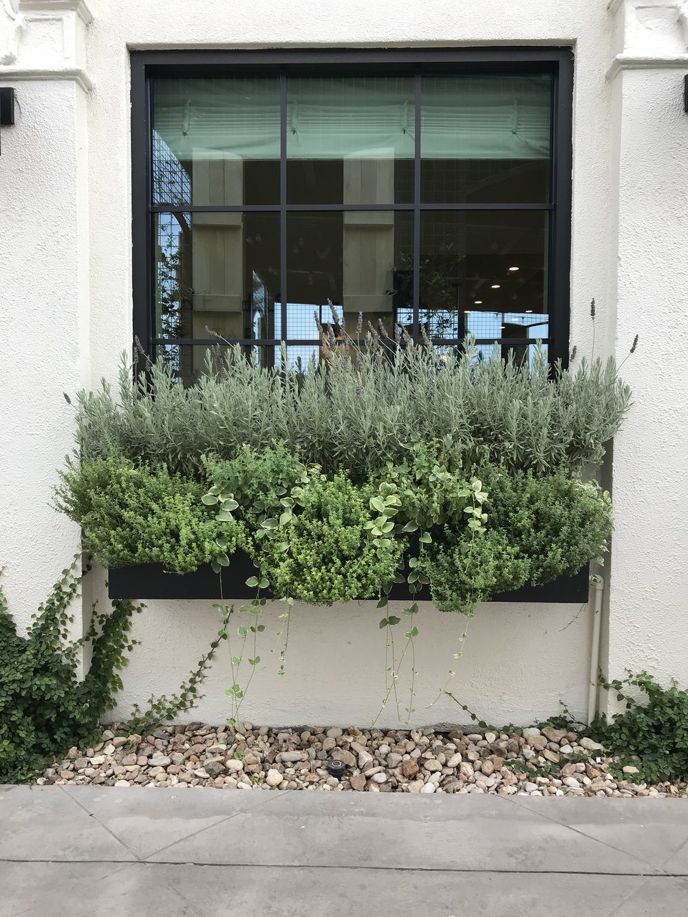 Window boxes filled with herbs...