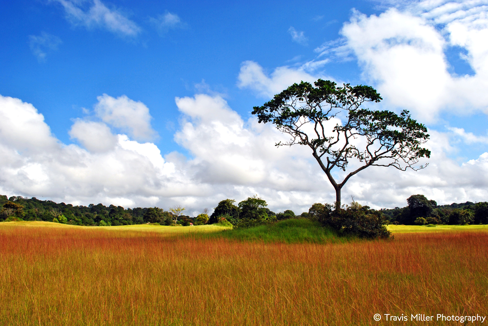 The Good Earth /  Doucki, Guinea