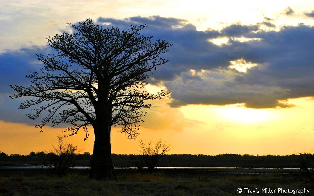 A Baobab Sunset /  Si Kunda, The Gambia