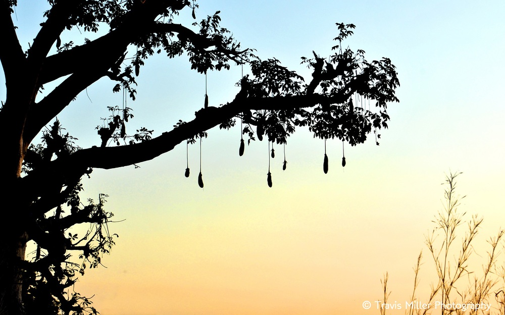 Low Hanging Fruit /  Si Kunda, The Gambia