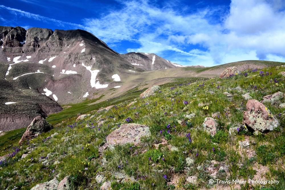 A Mountainside Painted Purple /     La Garita Wilderness Area, CO