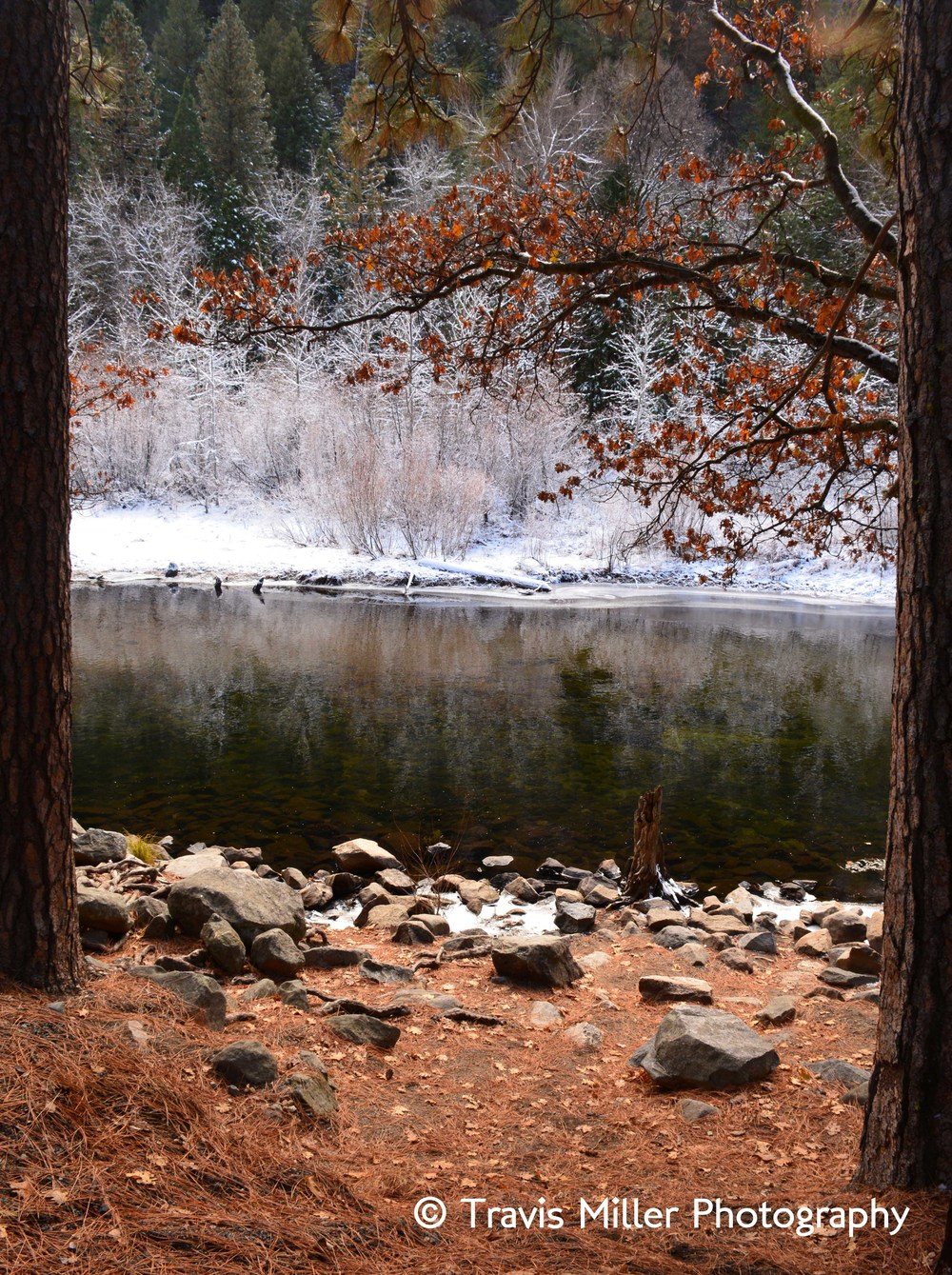On the Bank of the Merced /    Yosemite Valley, CA