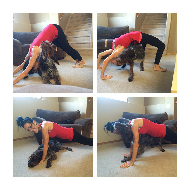 Yoga with pets 8.jpg