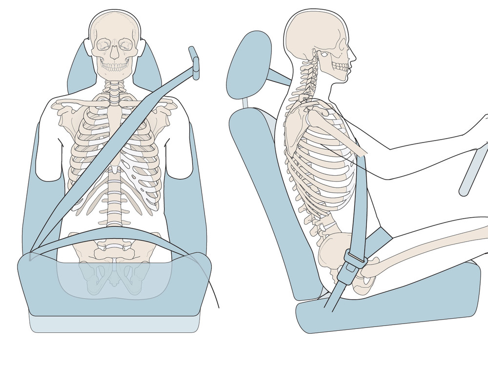 Exhibit 1.  Illustrations that show the position of the bones of the thorax and the abdomen relative to the lap and shoulder belt parts of the seat belt.