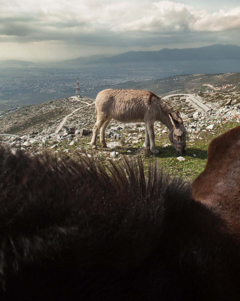Ponies close to the summit of Mt. Penteli. View looking southwest.