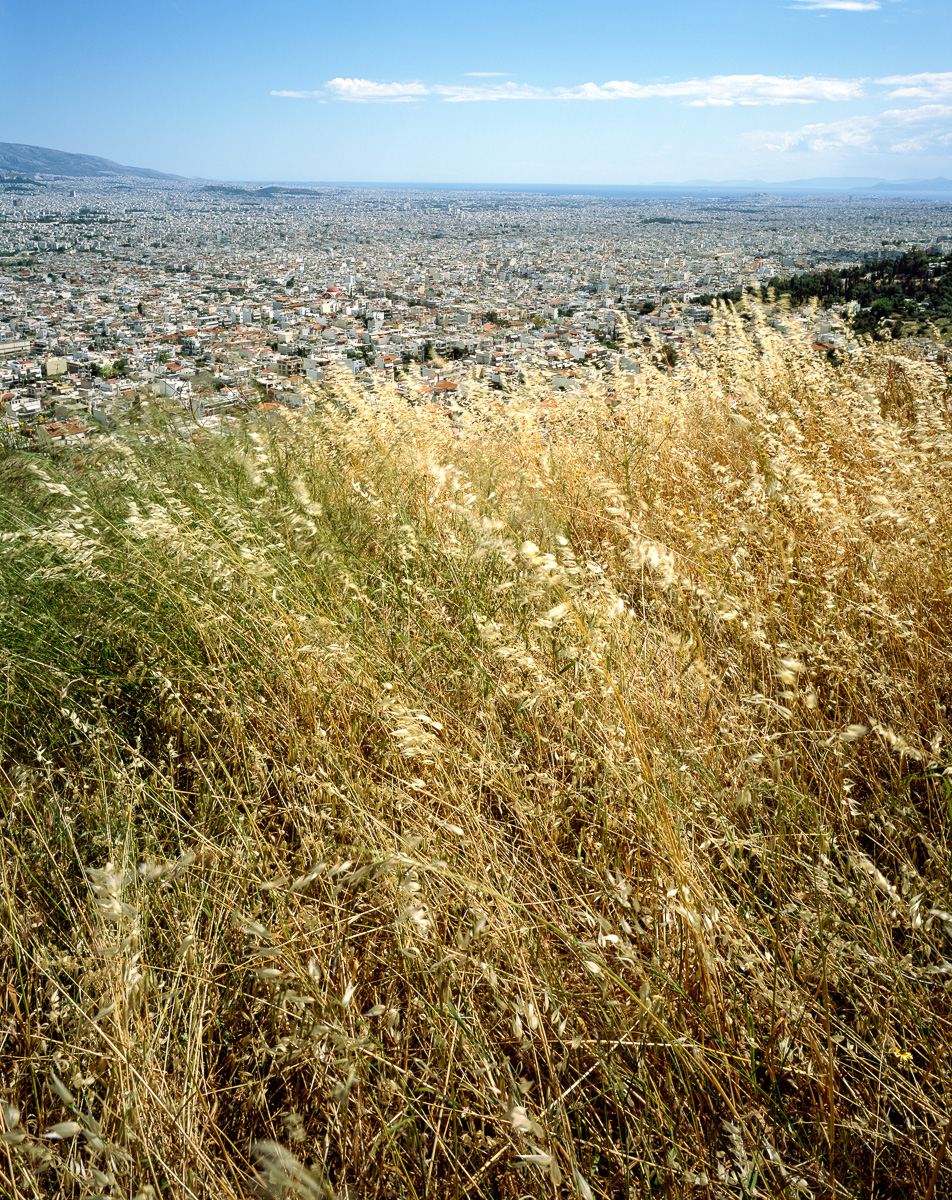 Wheatgrass on the slopes of Mt. Egaleo. The southern slopes of Mt. Hymettus are visible in the background, as is the Acropolis of Athens. View facing southeast.