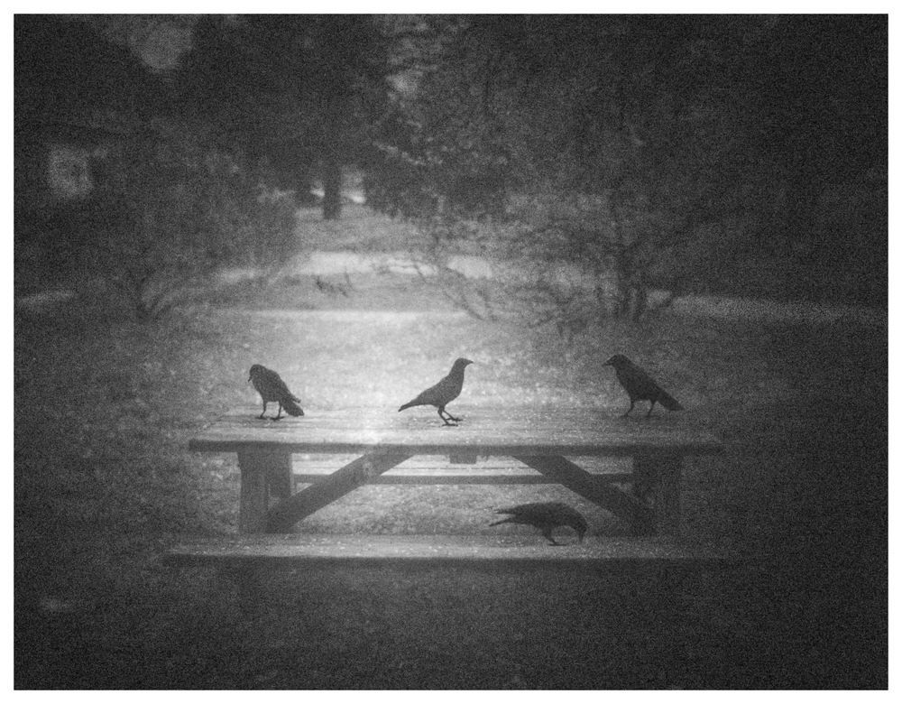 A_Birds_on_Bench.jpg