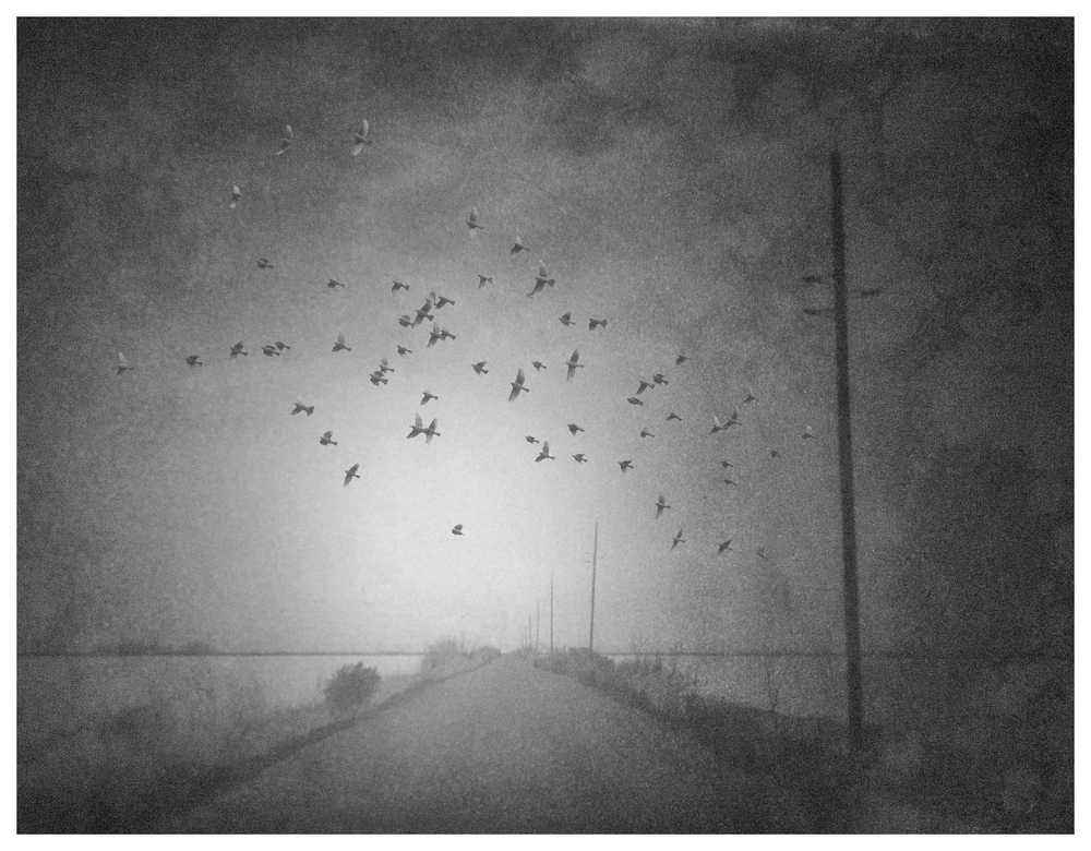 A_Birds_Over_Road.jpg