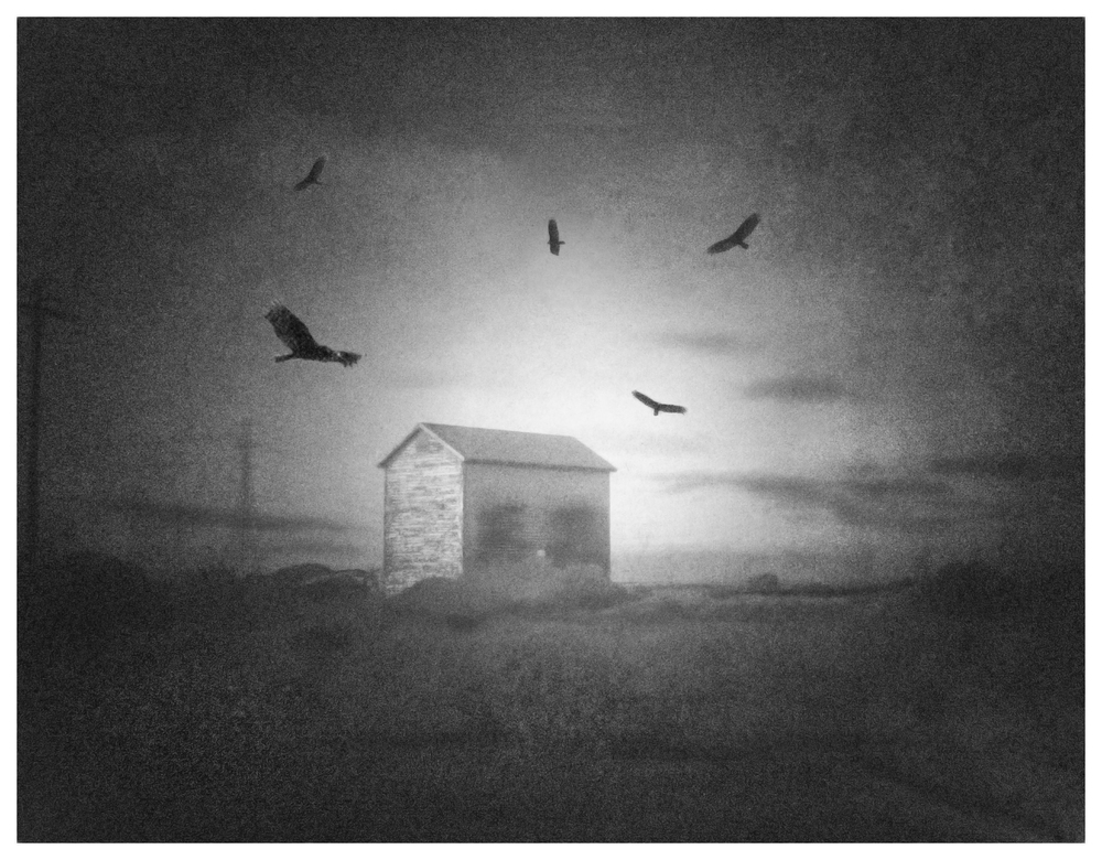 Birds-over-BArn.jpg