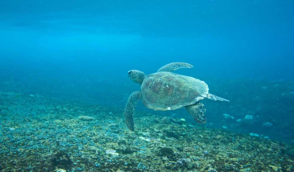 Western Samoa Adventure Vacation
