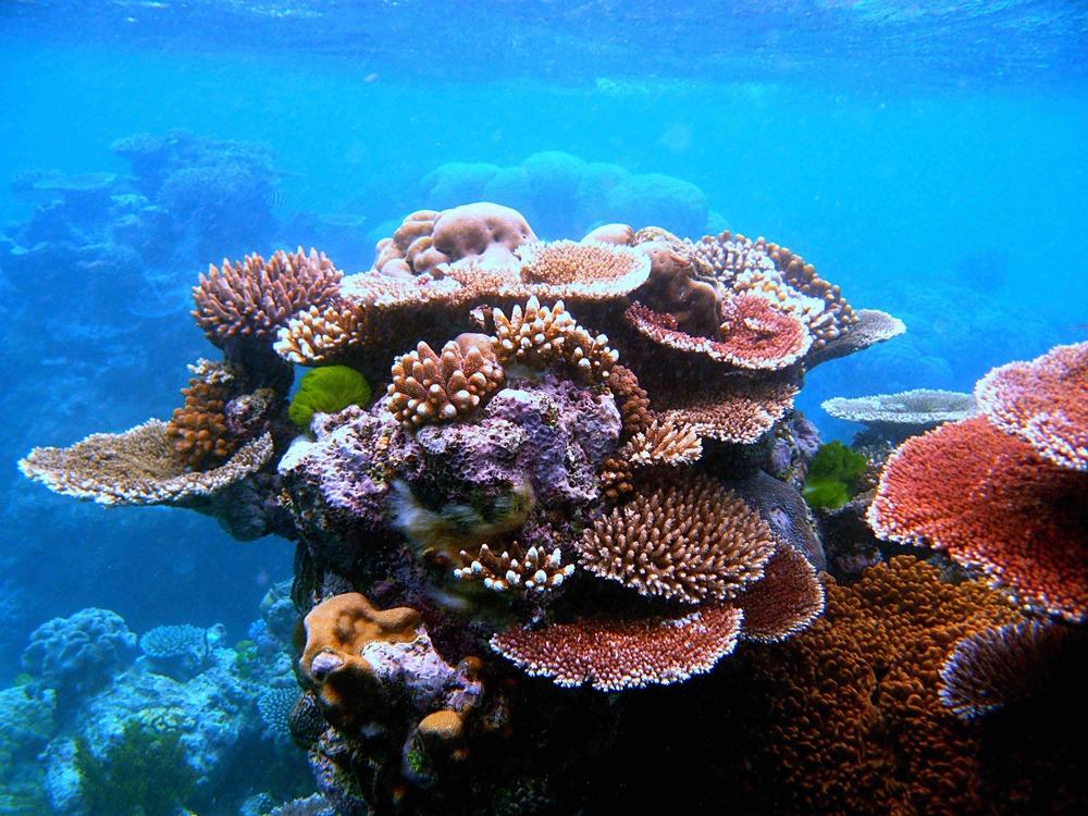 Fanning-Island-Resort Snorkeling central pacific ocean paradise