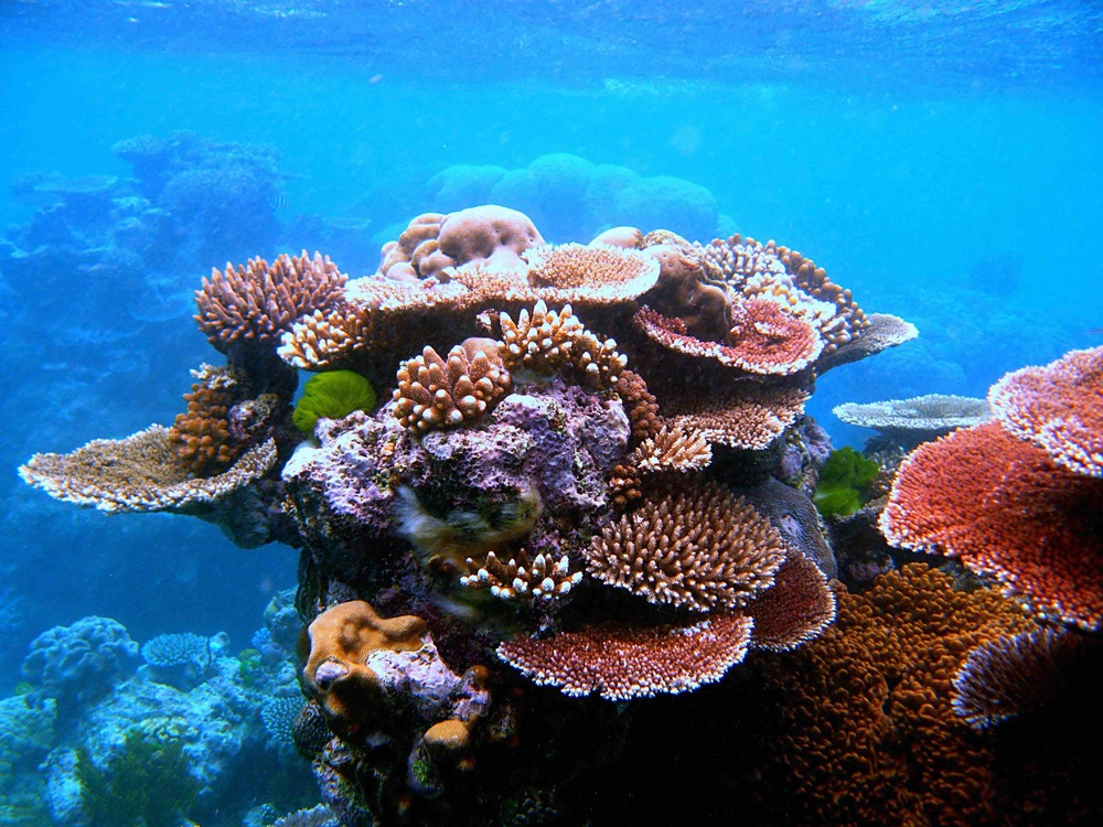Snorkeling south pacific ocean paradise