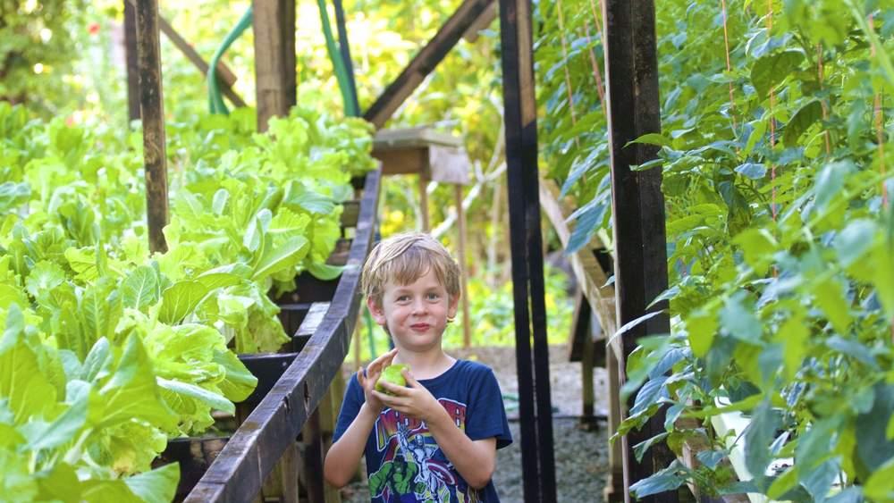 Aganoa Lodge Samoa Fresh Hydroponics Garden