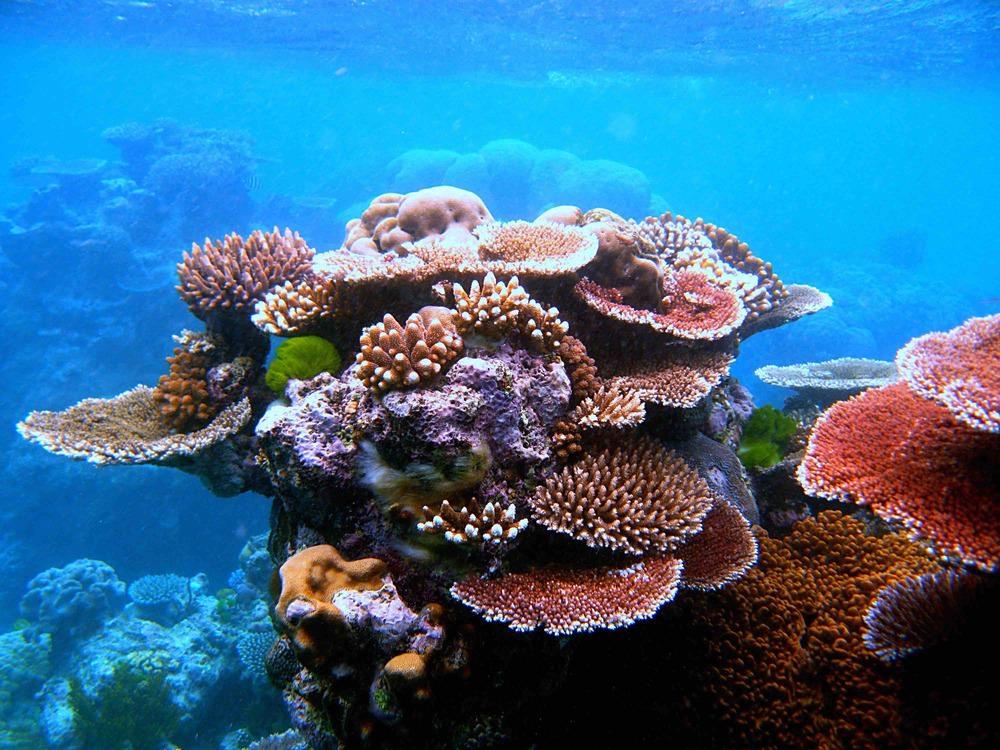 SNORKELING WCom bons recifes de coral e um indústria de pesca limitada, a Ilha Telo é um sonho do mergulhador. Alguns dos nossos lugares menos conhecidos possuem de peixes-napoleão a peixes-anjo. Nós fornecemos todo o equipamento necessário.