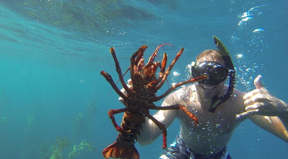 Fanning-Island-Resort saltwater diving for spiny lobster