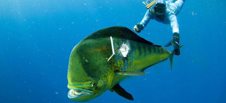 Fanning-Island-Resort spearfishing for saltwater fish