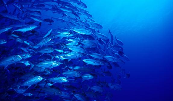 Fanning-Island-Resort saltwater fishing for doggie, trevally tuna and wahoo