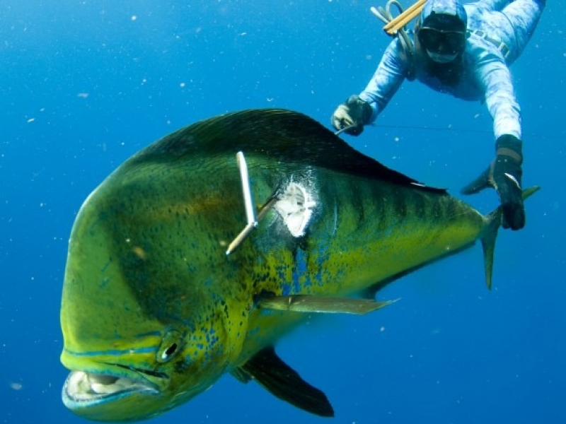Spearfishing for Tuna and Wahoo at Fanning Island Resort