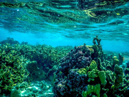Drift snorkeling at Fanning Island Resort