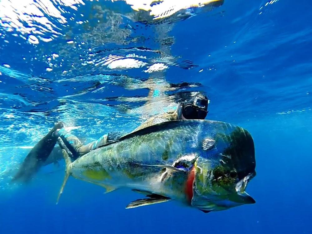 Fanning-Island-Resort-spear fishing destination fanning island resort, pacific ocean