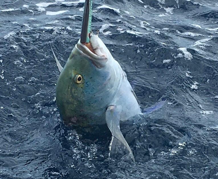 Landing the bluefin trevally while trolling the blue waters, Pegasus Resorts.jpg