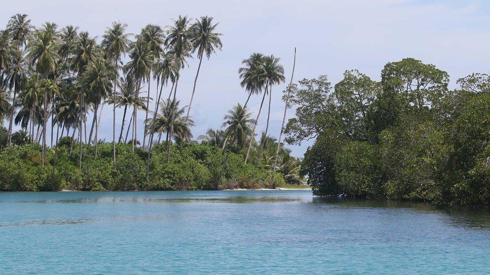 Mangrove cruise.
