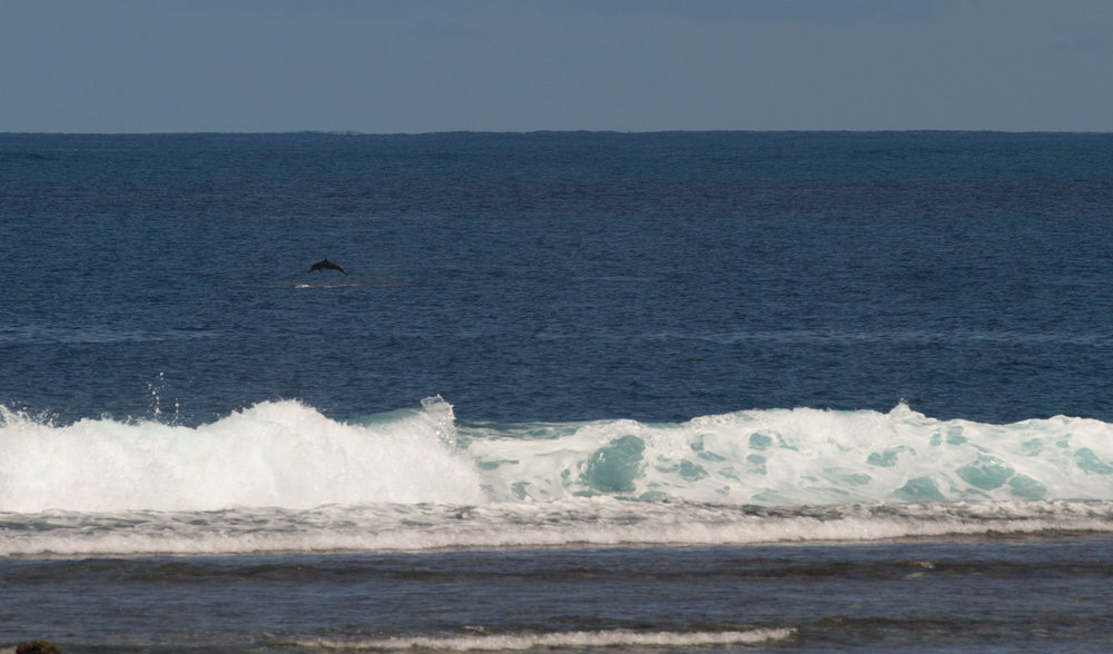 The spinner dolphins in their playground.