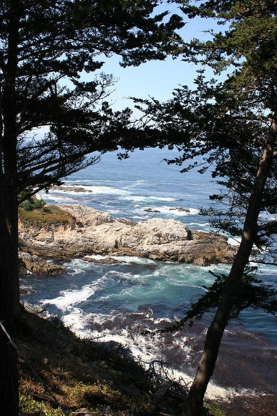 17 mile drive california.jpg