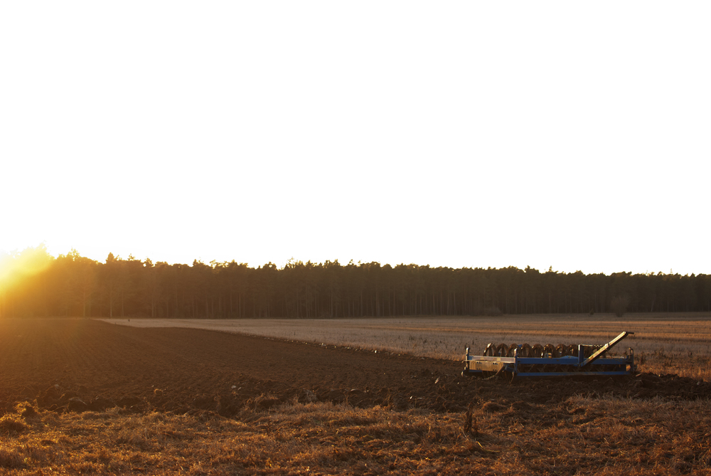 Leif_Orleifson_18_Gotland_2011.jpg