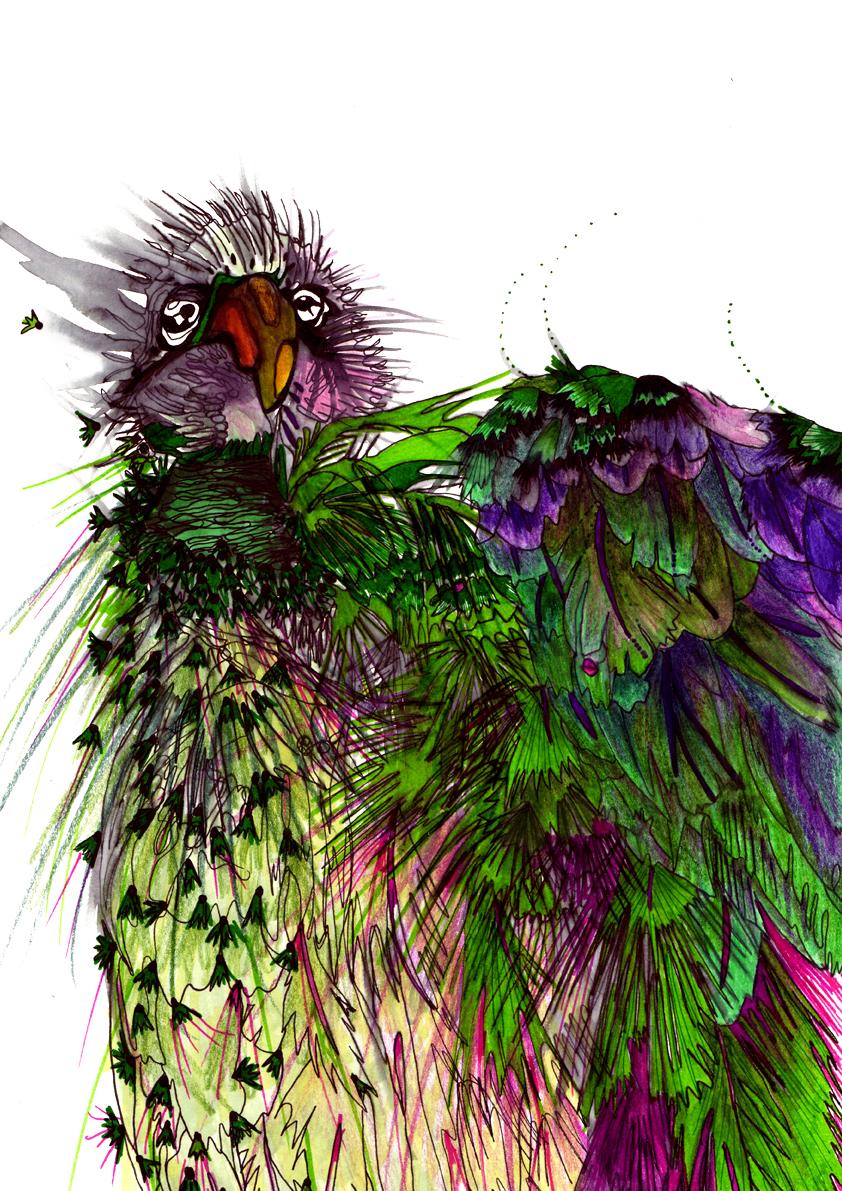 BIRDS4.jpg