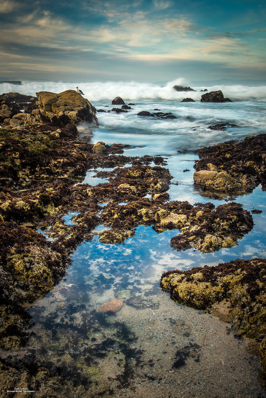 Pacific Grove Tidal II