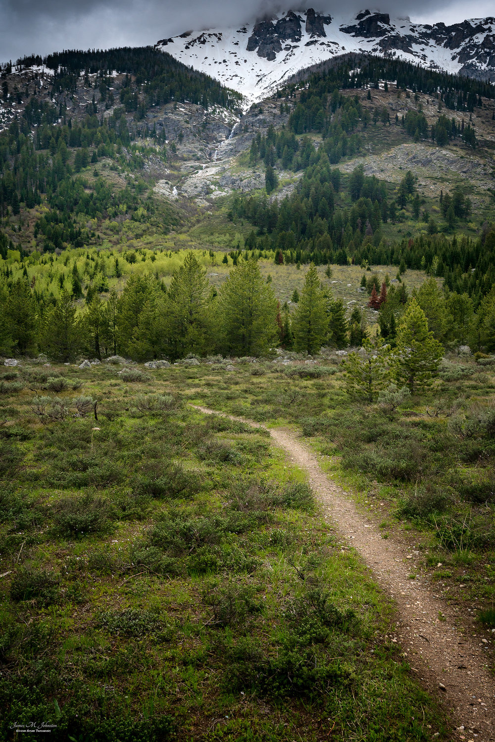 Lupine Meadow Pathway