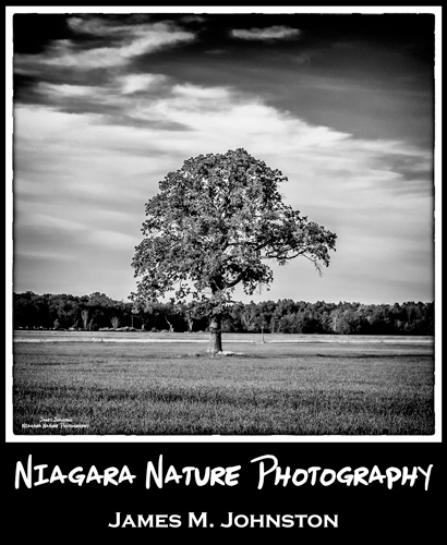 Niagara Nature Photography