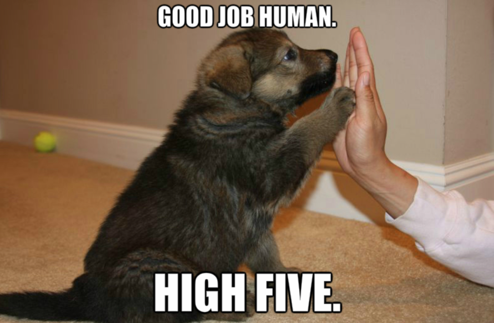 Dog five.png