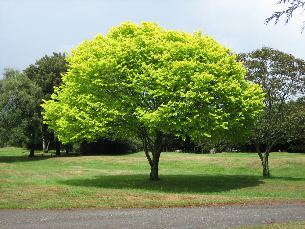 Source:https://upload.wikimedia.org/wikipedia/commons/f/f6/Bright_green_tree_-_Waikato.jpg