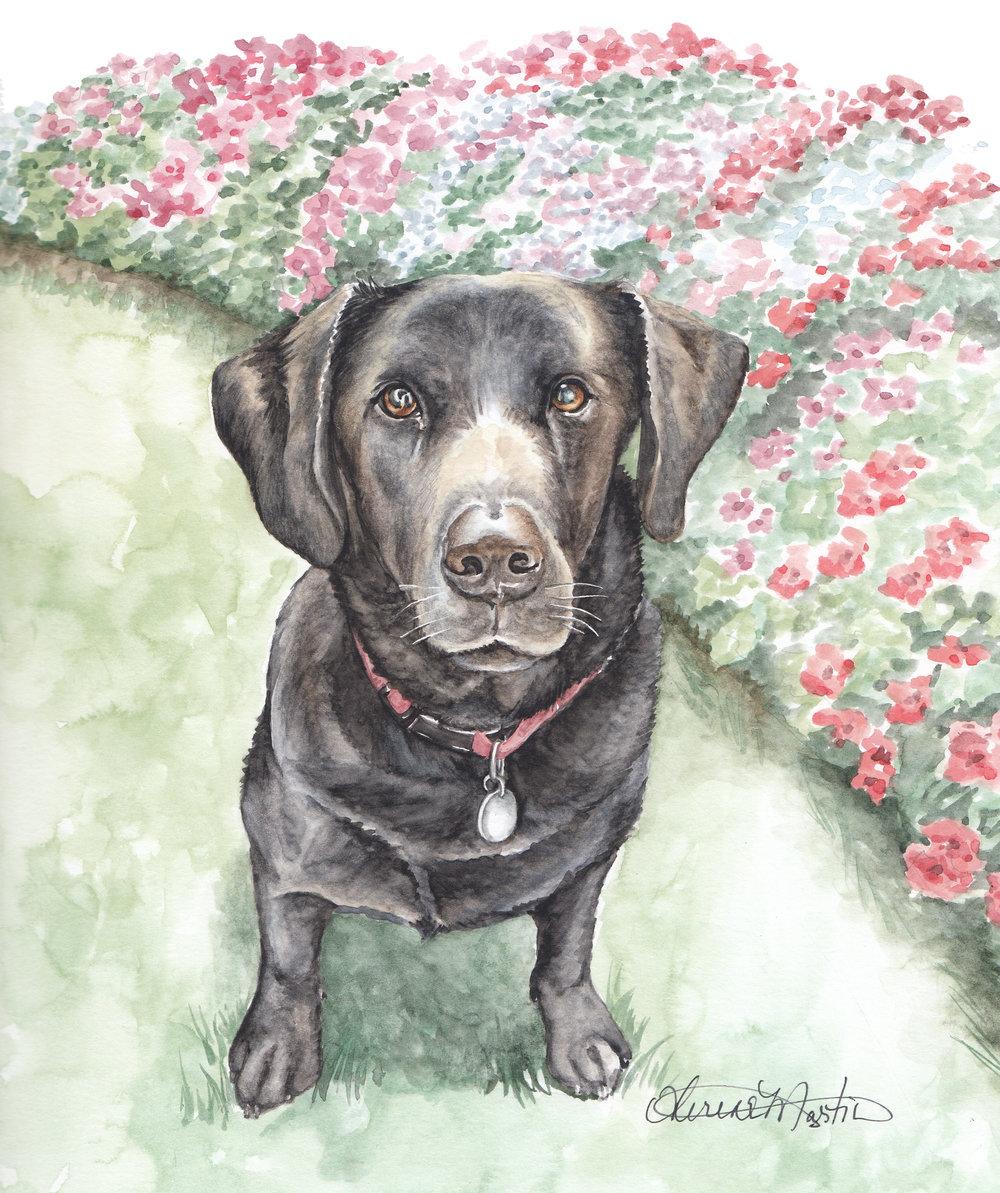 Heather Fraser Pet Portrait.jpg