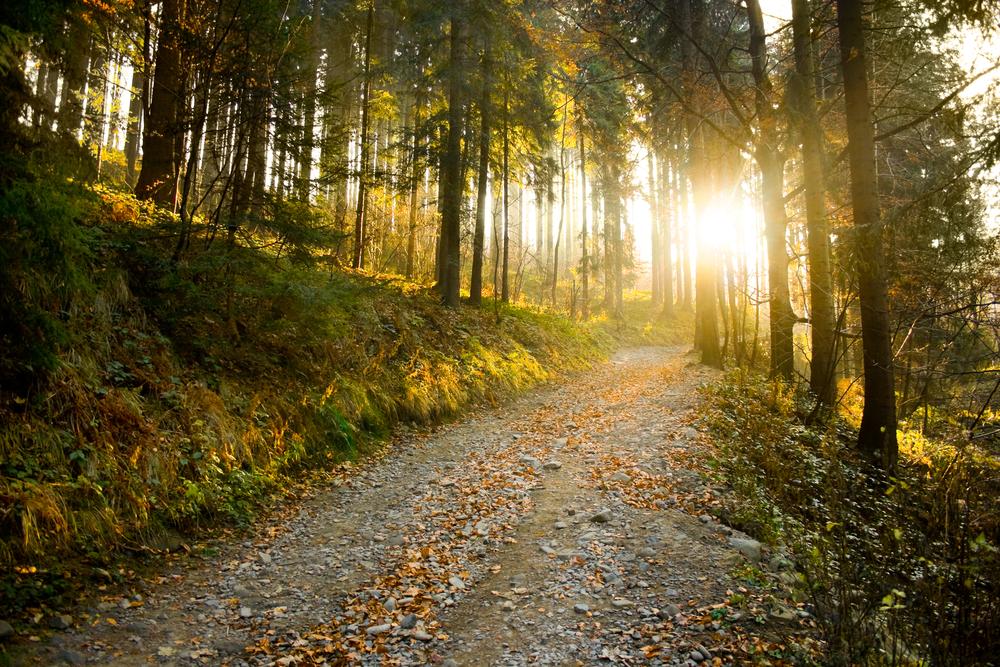 mountain-path-sun