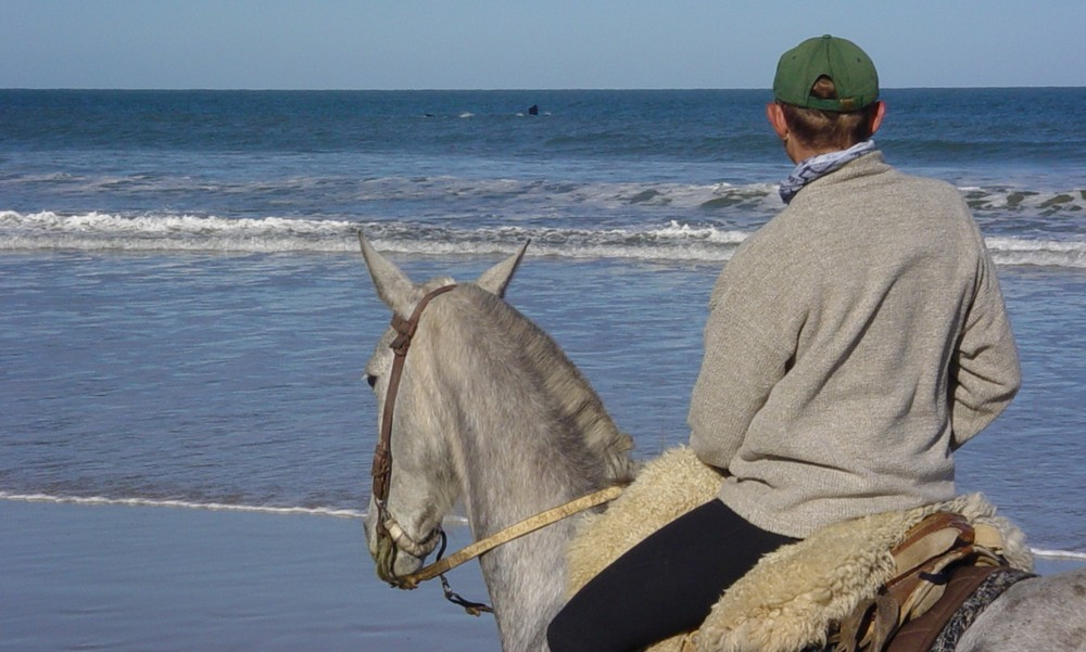 Uruguay whale watching, horseback riding vacation.JPG