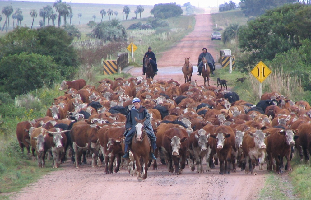 Traffic jam on a main road! Uruguay.jpg
