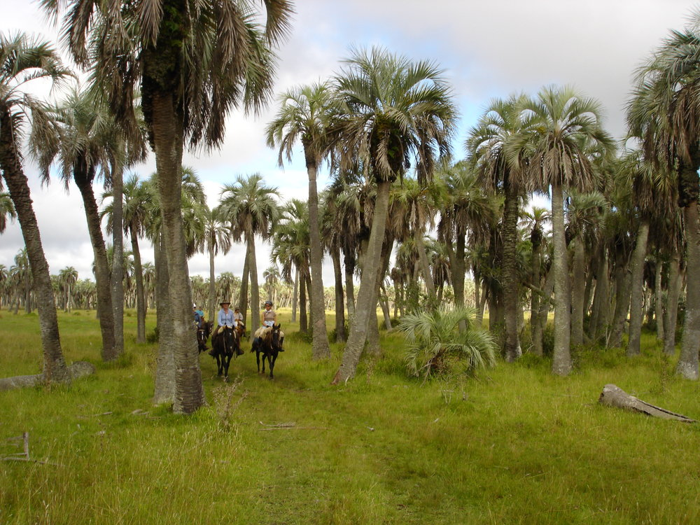 Copy of Uruguay , riders & palm grove.jpg