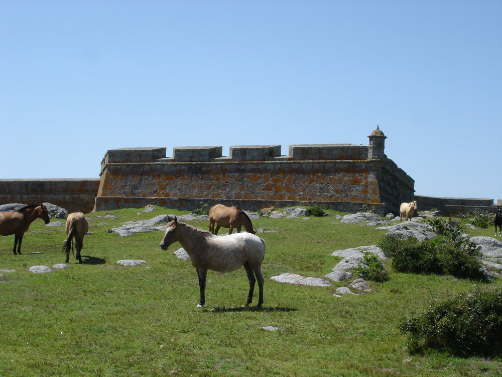 Uruguay criollo horse and fort, horse riding vacation.jpg