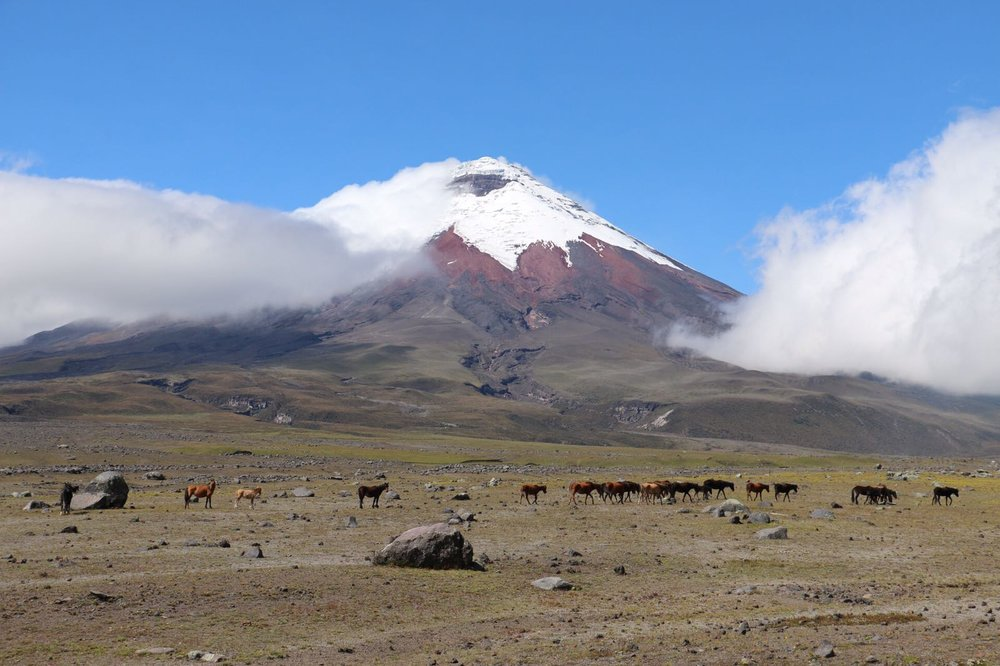 Ride Andes horse trek volcano ecuador south america