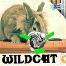 Copy of Wildcat (Killer Tracks Library 2011)