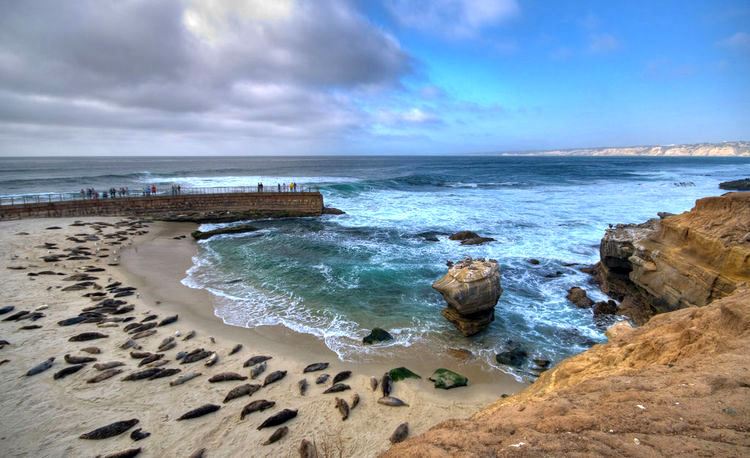 4474427567_750_la-jolla-beach SEALS.jpg