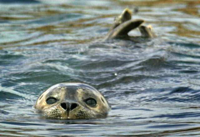 The La Jolla Cove is home to a small seal population.