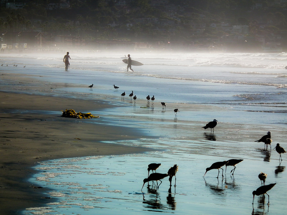 birds-at-La-Jolla-Shores-Beach-California-USA-www_tourismprofile_com_.jpg