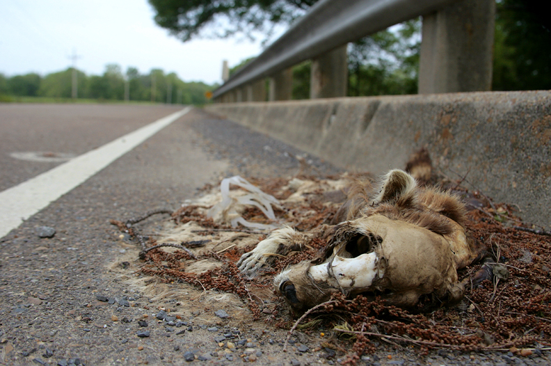 Road kill documentation