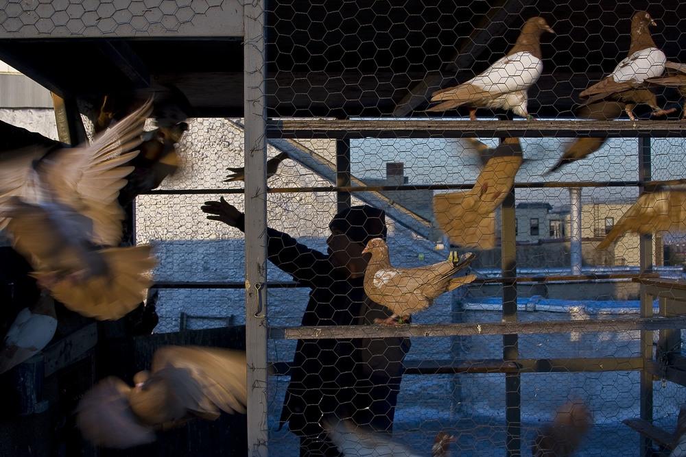 Pigeon Coop. 2012.