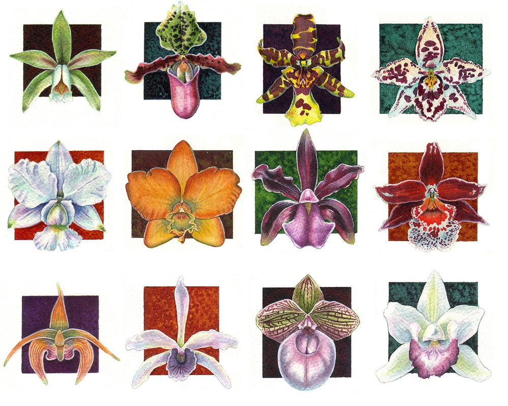 Orchid Miniatures