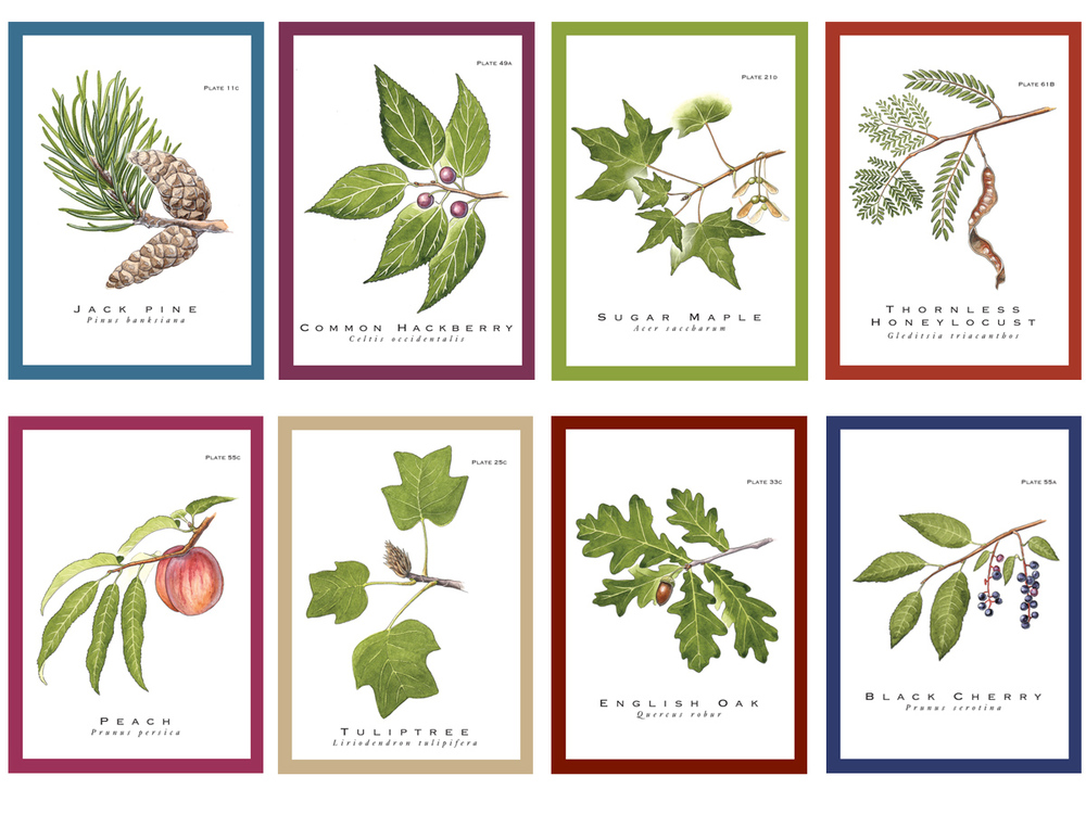 True Nature Give-A-Tree® Cards